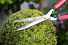 HND Garden Design - SQA