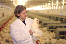 SVQ 3 Poultry Production at SCQF level 6