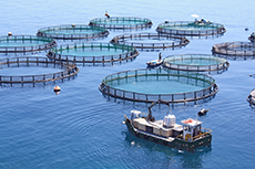 SVQ 3 Aquaculture at SCQF level 7