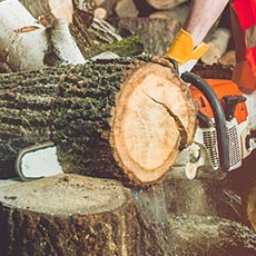 Award in Chainsaw Felling Large Trees at SCQF level 6