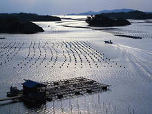 HNC Fish Farming