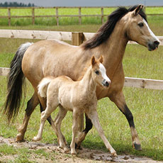 PDA Equine Breeding SCQF level 7