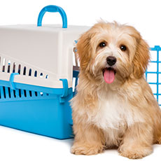 NPA in Dog Grooming: An Introduction at SCQF level 5