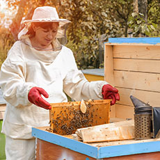 National Progression Award Beekeeping SCQF level 5